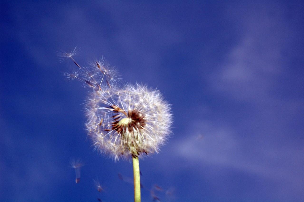 Jakie są objawy alergii?